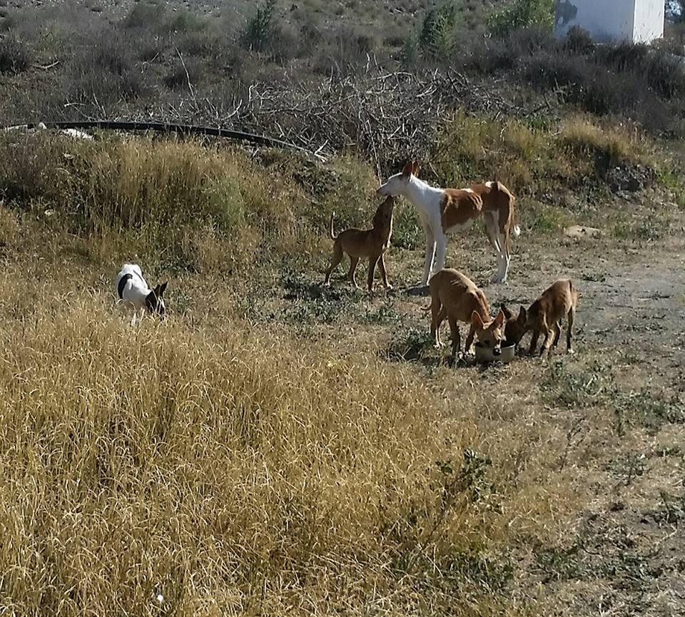 Moeder loua met haar pups, bambi, nymphe, meg en pepito gered door ...